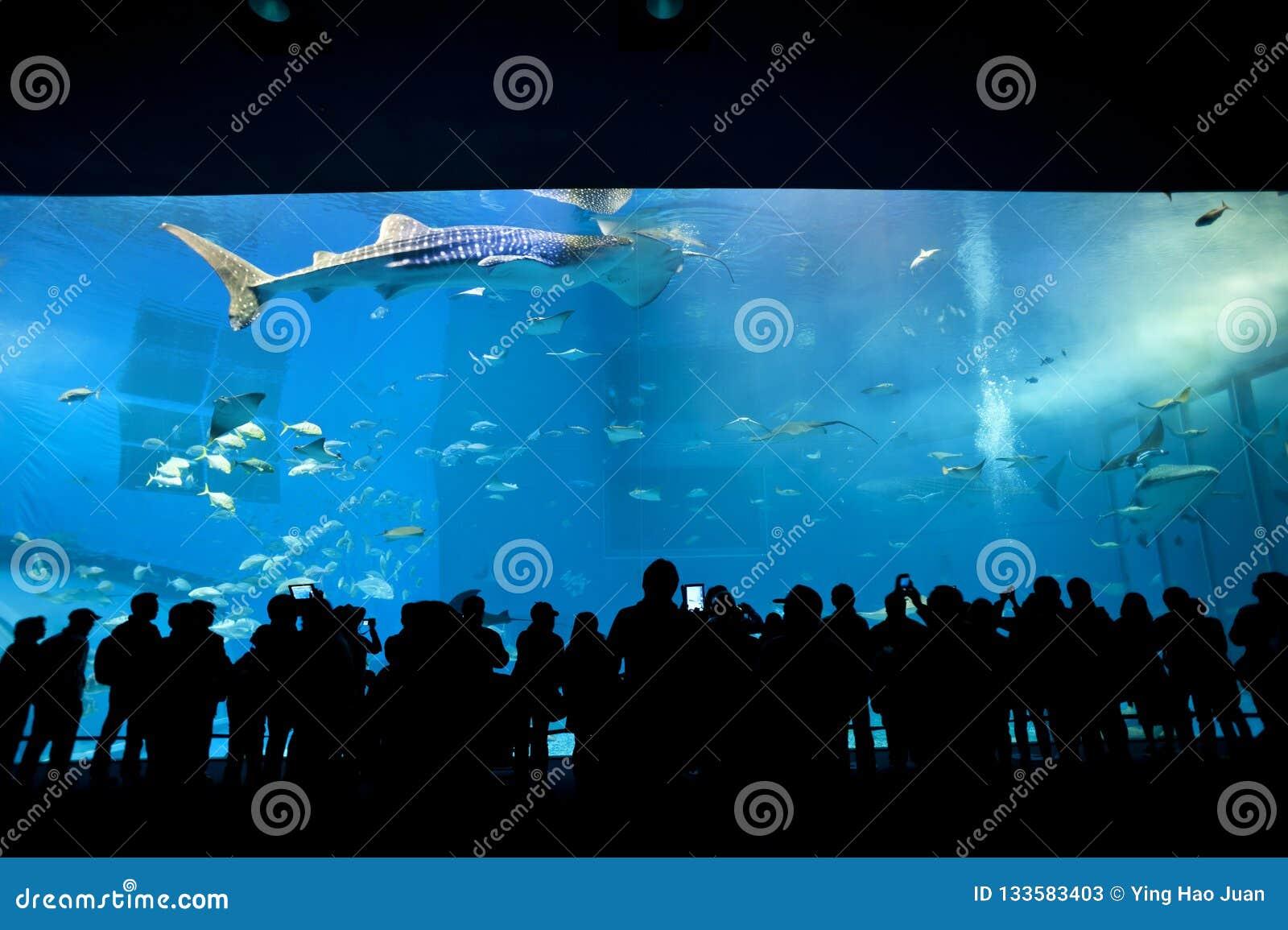De hoofdtank van Okinawa Aquarium