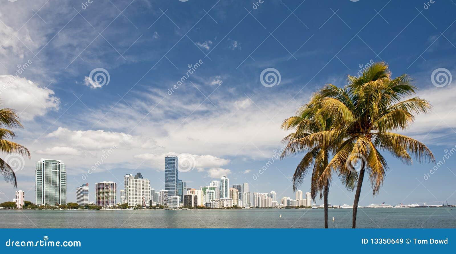 De horizon en de palmen van Miami
