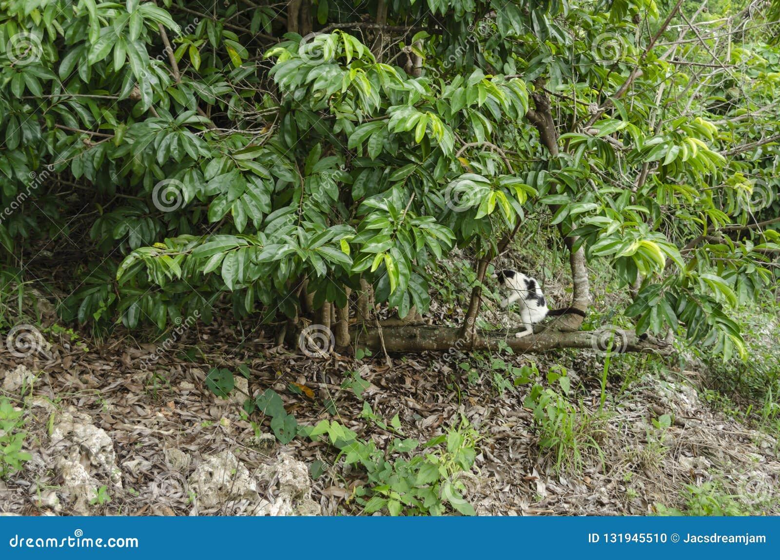 De Hotizntal el árbol crece ramas verticales