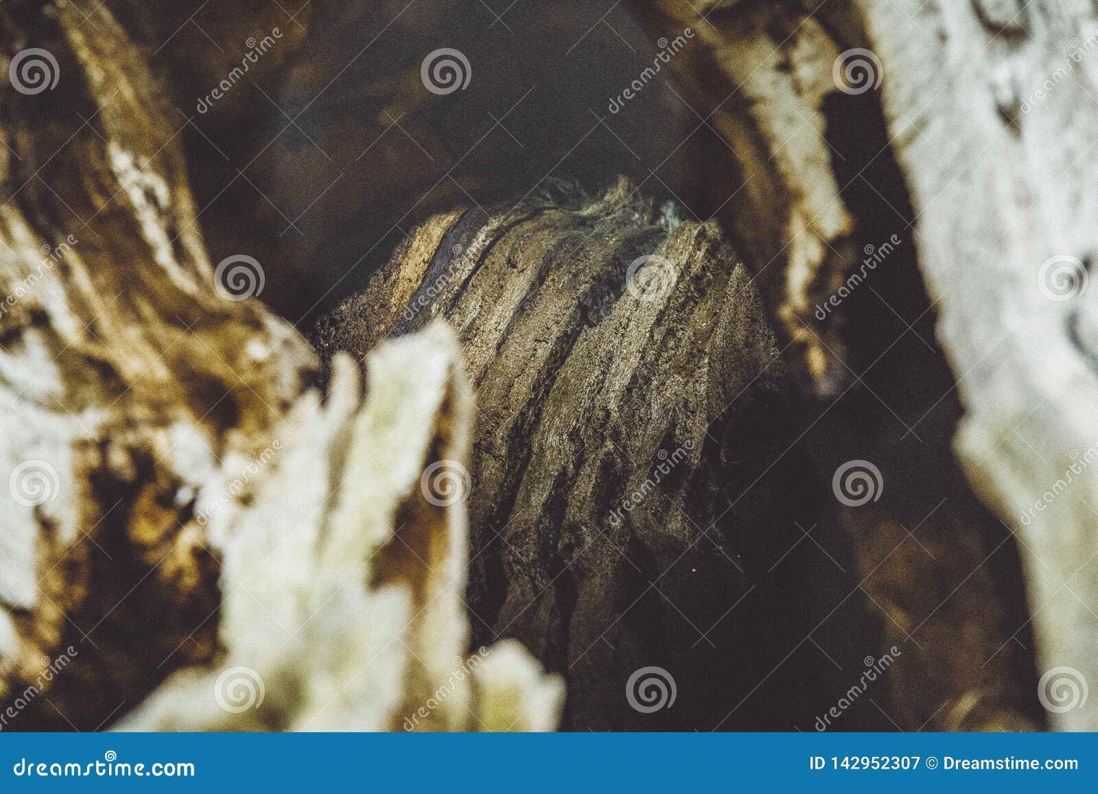 De houten close-up van de textuurboom