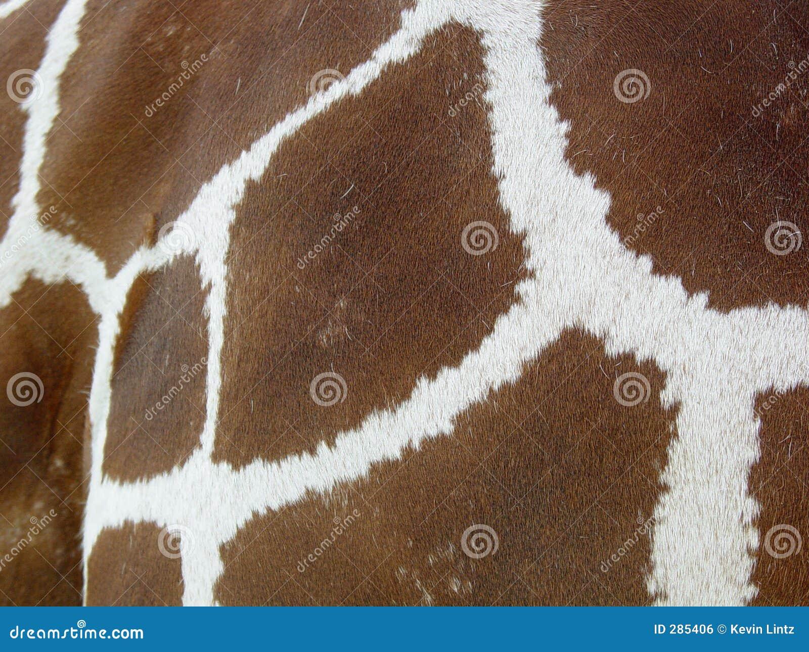 De huid van de giraf