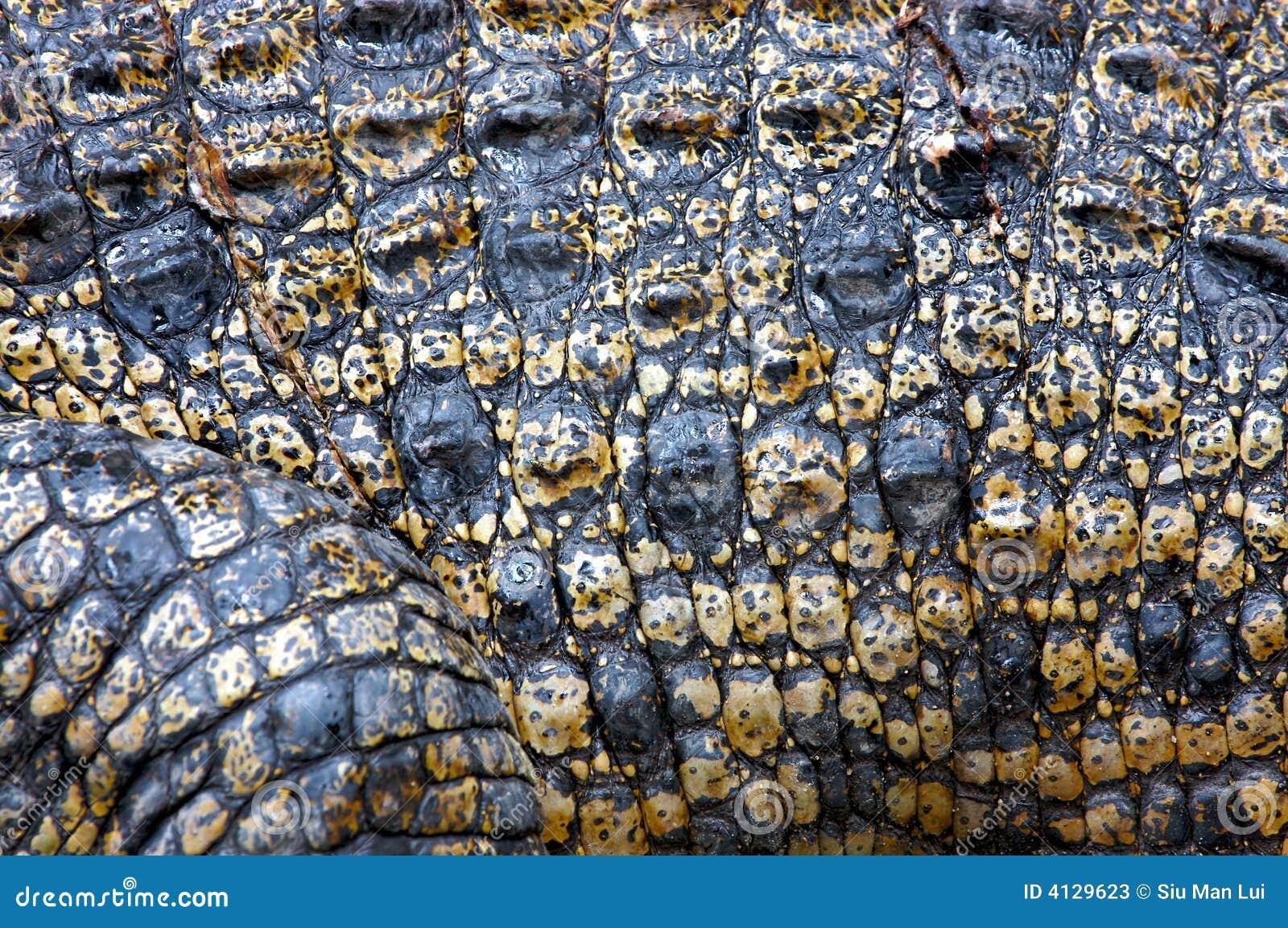 De Huid van de Krokodil van het zoutwater