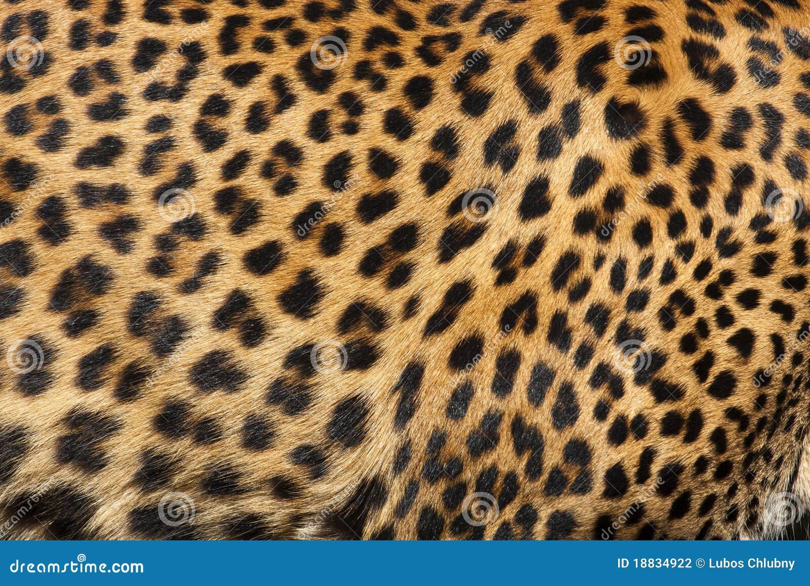De Huid Van De Luipaard Stock Foto Afbeelding Bestaande