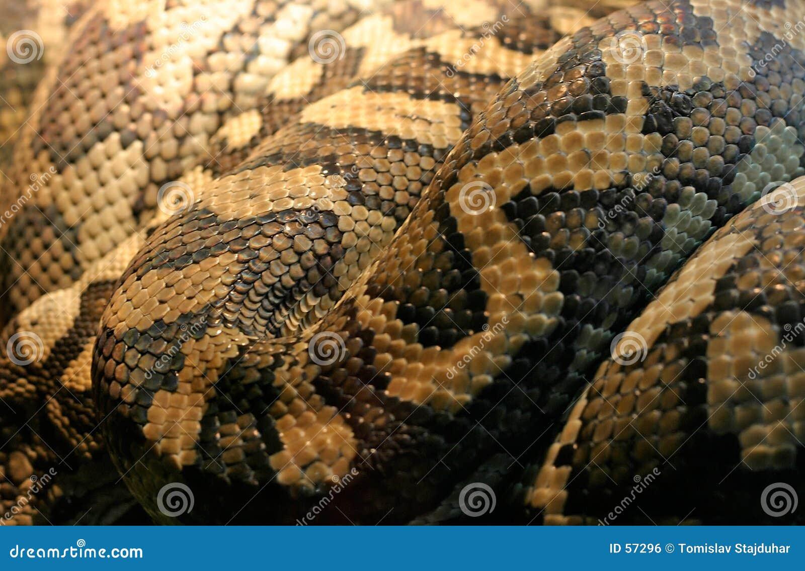 De huid van de slang