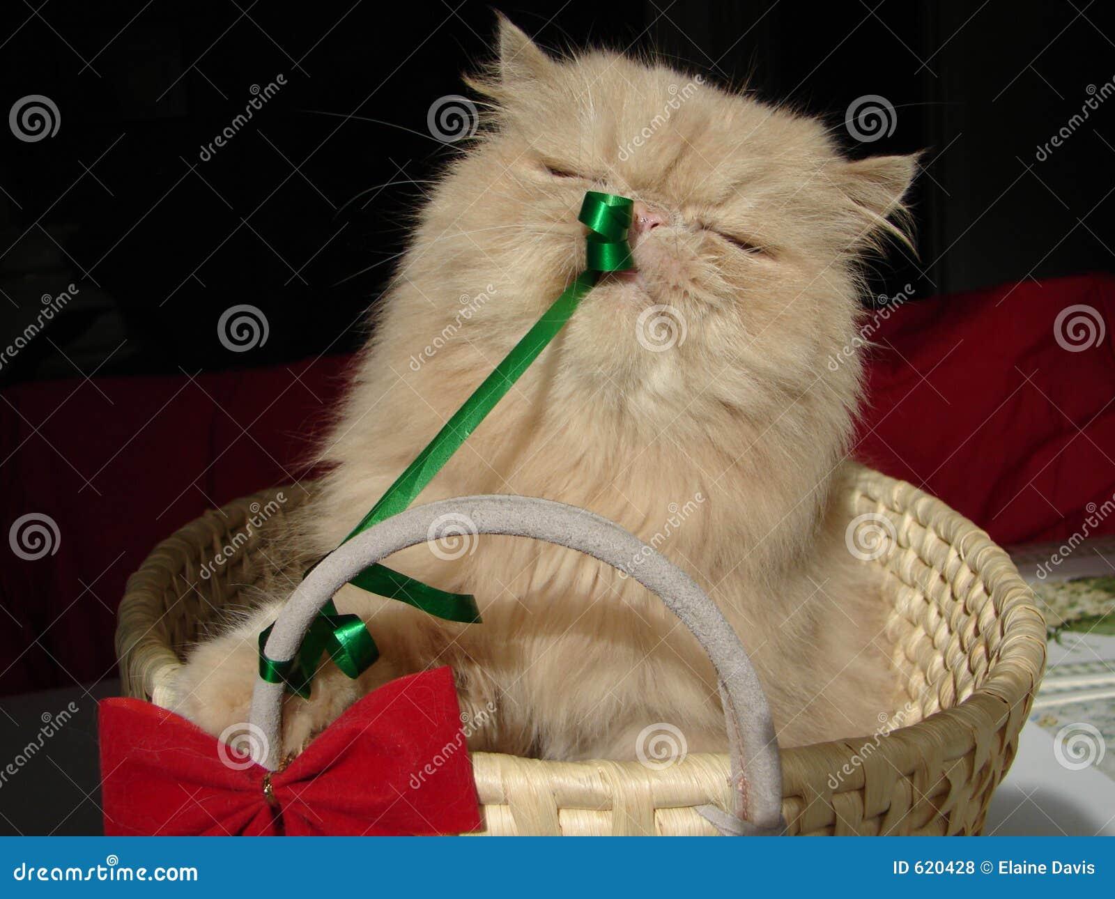 De Huidige Kat van Kerstmis