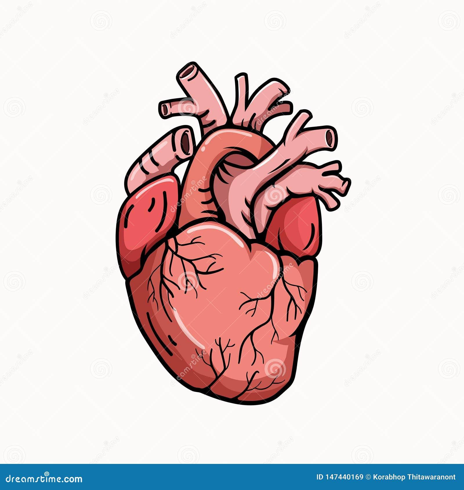 De illustratiestijl van de hart echte vorm