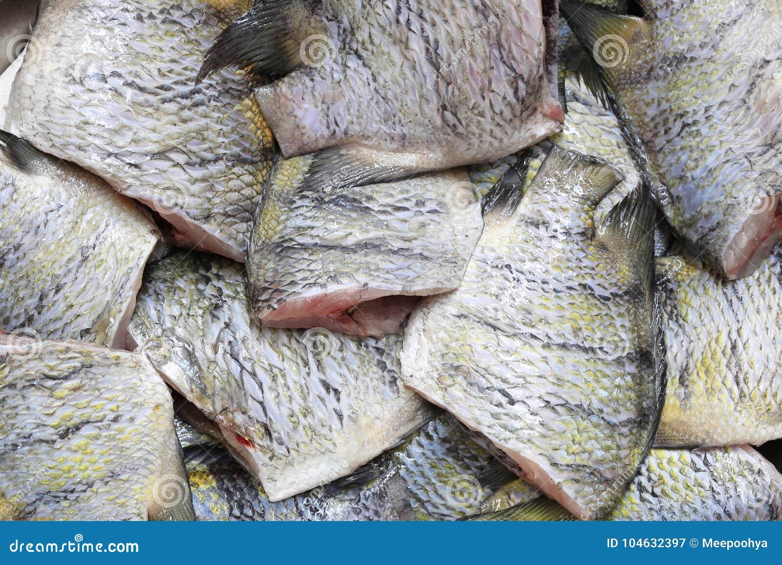 Download De Indo-vreedzame Sergeant Of Abudefduf-achtergrond Van Vaigiensisvissen Stock Afbeelding - Afbeelding bestaande uit nave, idee: 104632397