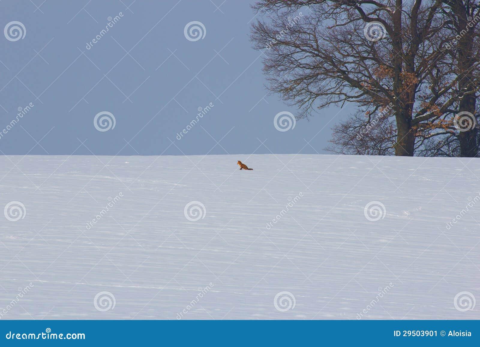 De indrukken van de winter met vos