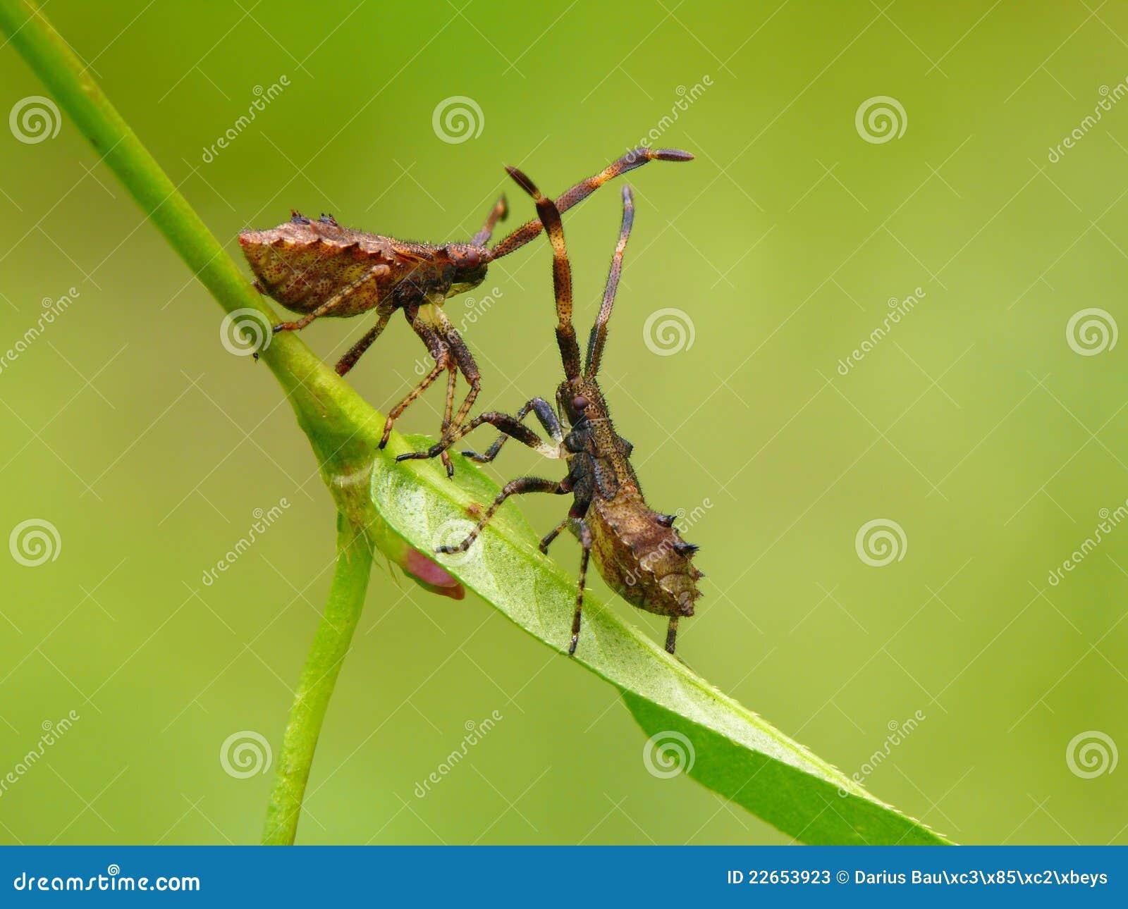 De insecten van het dok