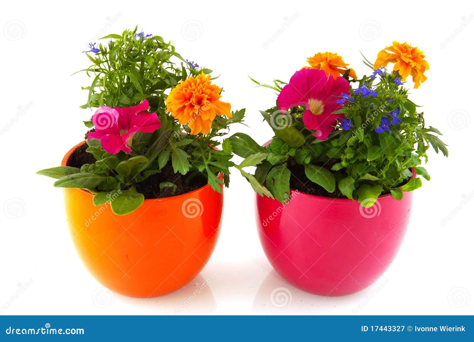 De installaties van de tuin met bloemen