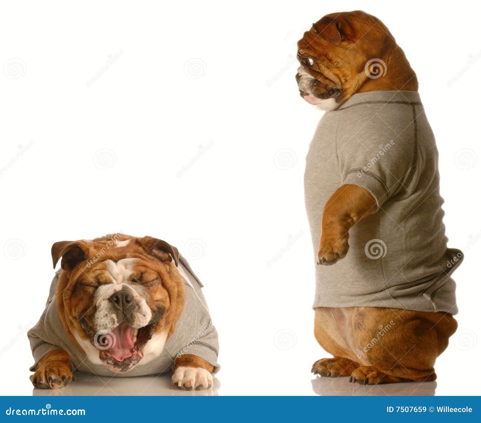 De intimidatie van de hond