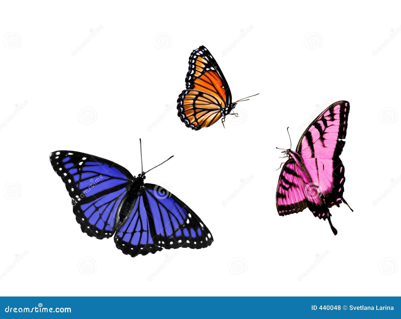 De inzameling van de vlinder (3 voor 1)