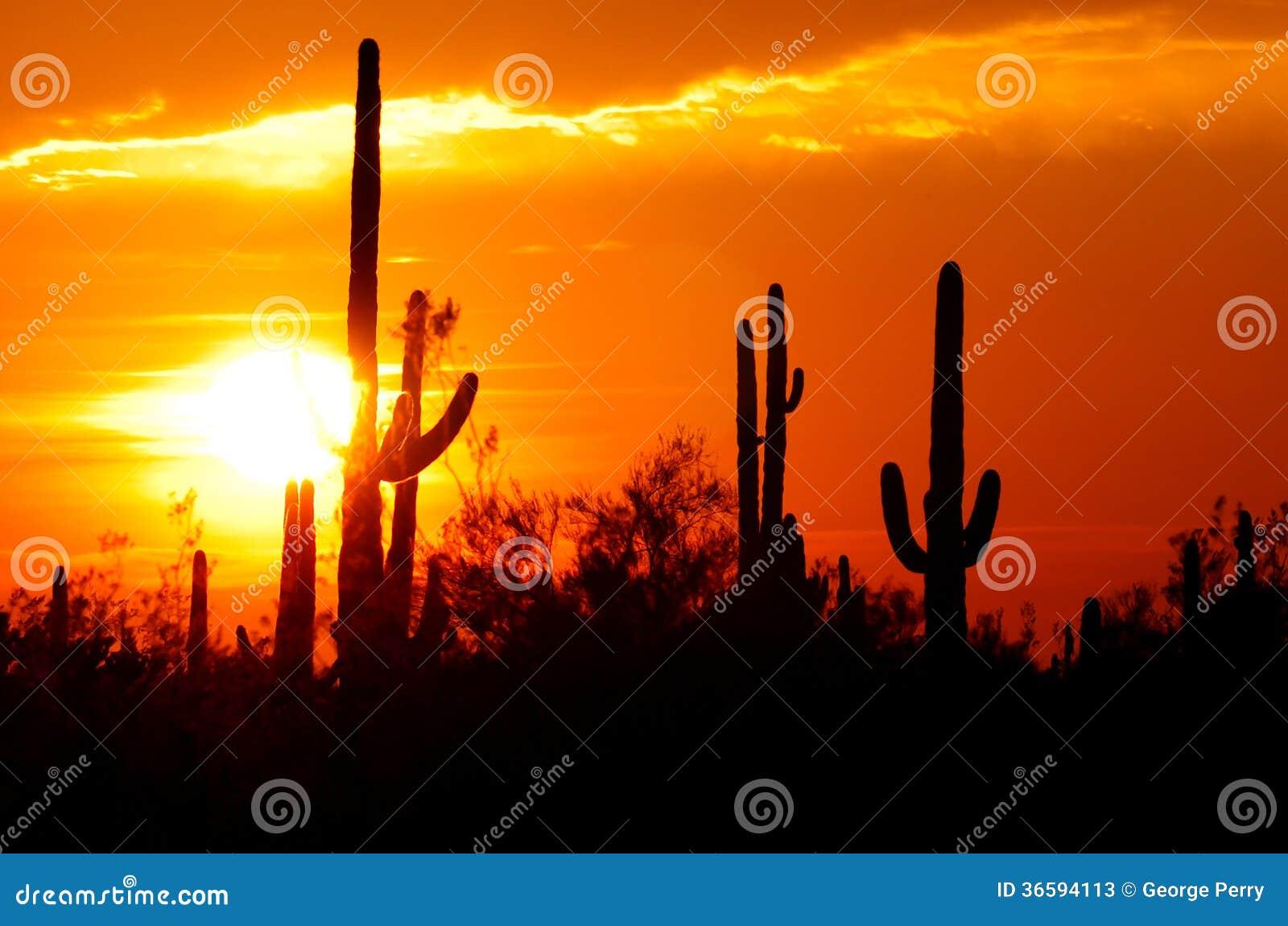 De inzameling van de woestijnzonsondergang