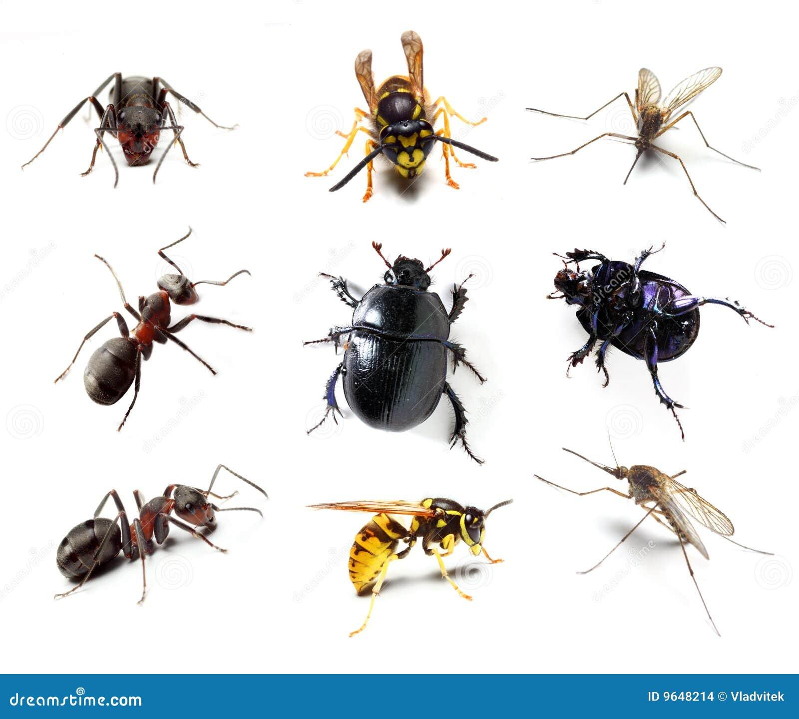 De inzameling van het insect