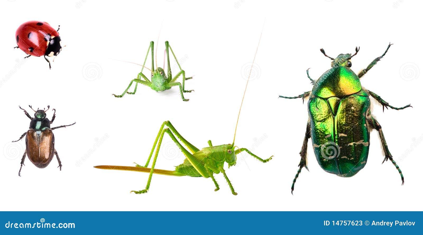 De inzameling van insecten die op wit wordt geïsoleerdl