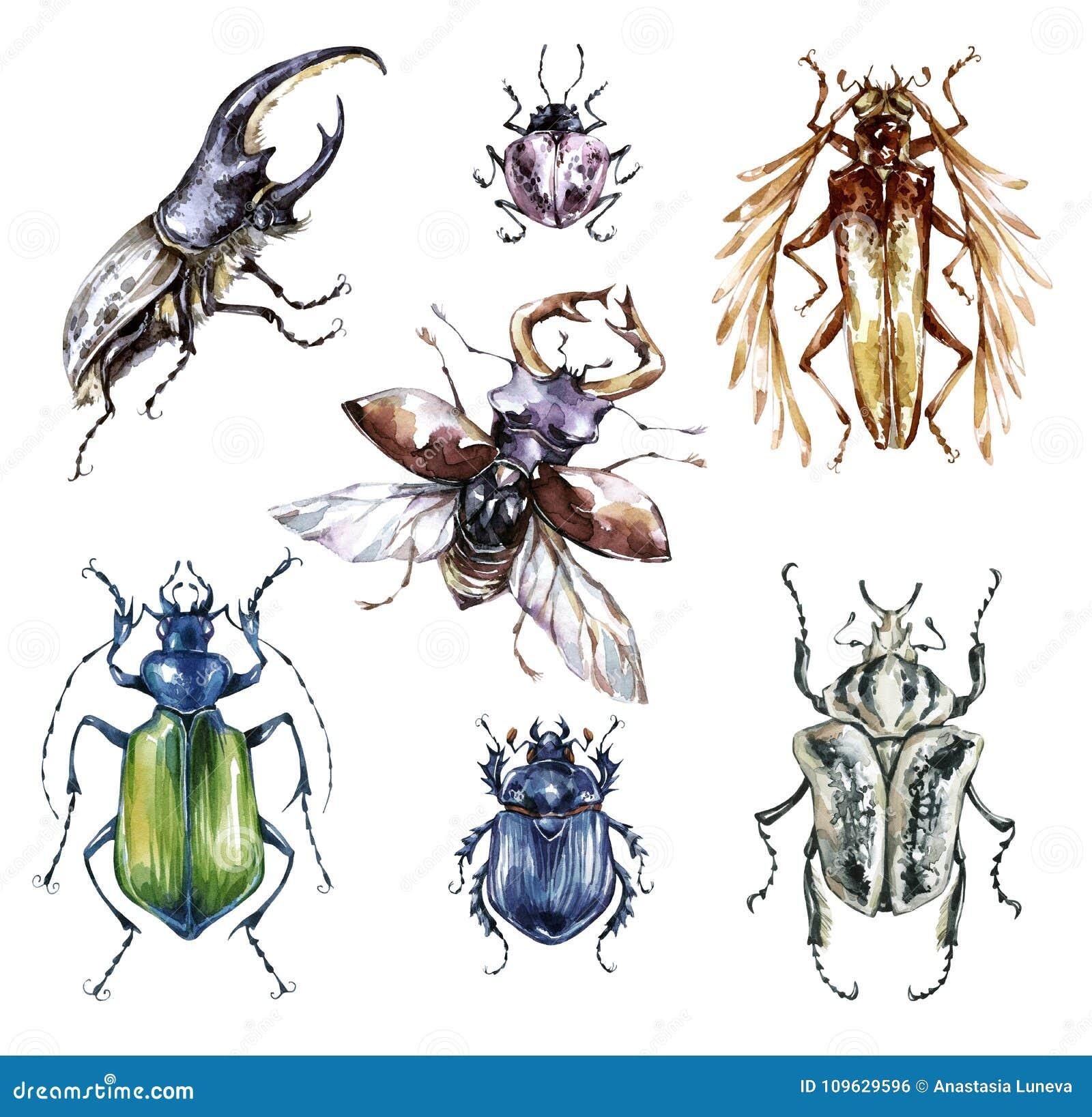 De inzameling van waterverfkevers op een witte achtergrond Dier, insecten entomologie wildlife Kan op T-shirts worden gedrukt