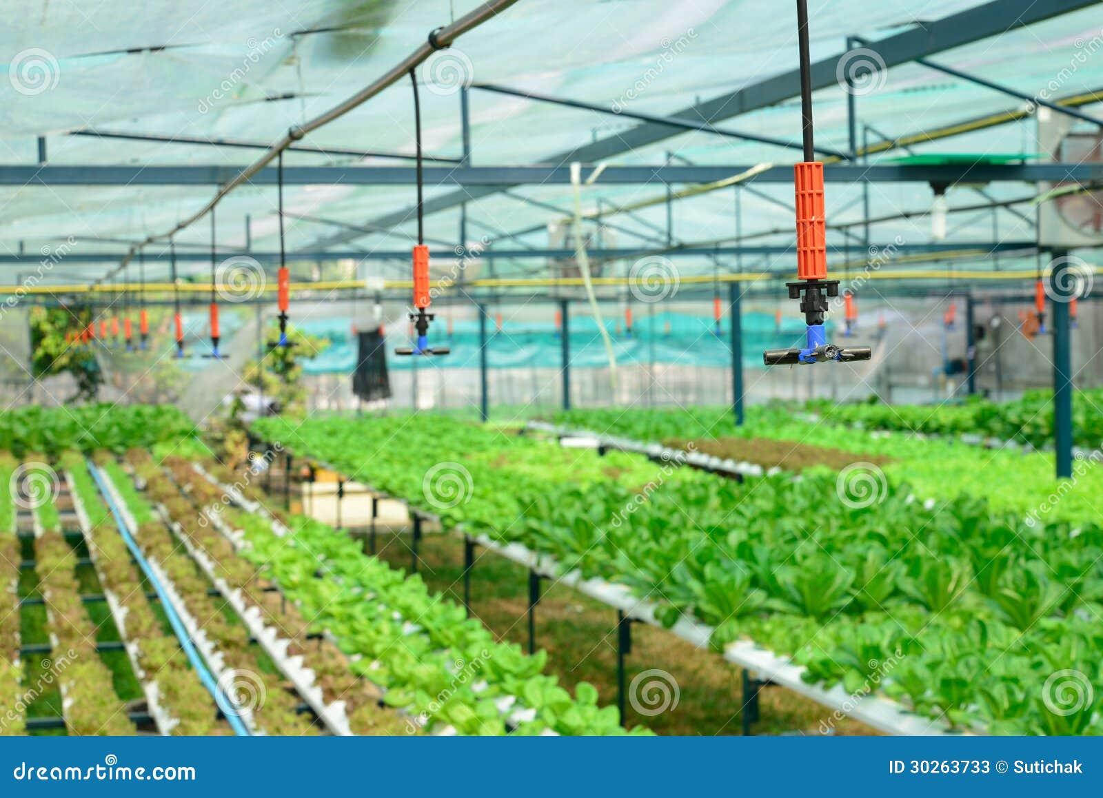 De irrigatie van de sproeier in hydrocultuur plantaardig landbouwbedrijf
