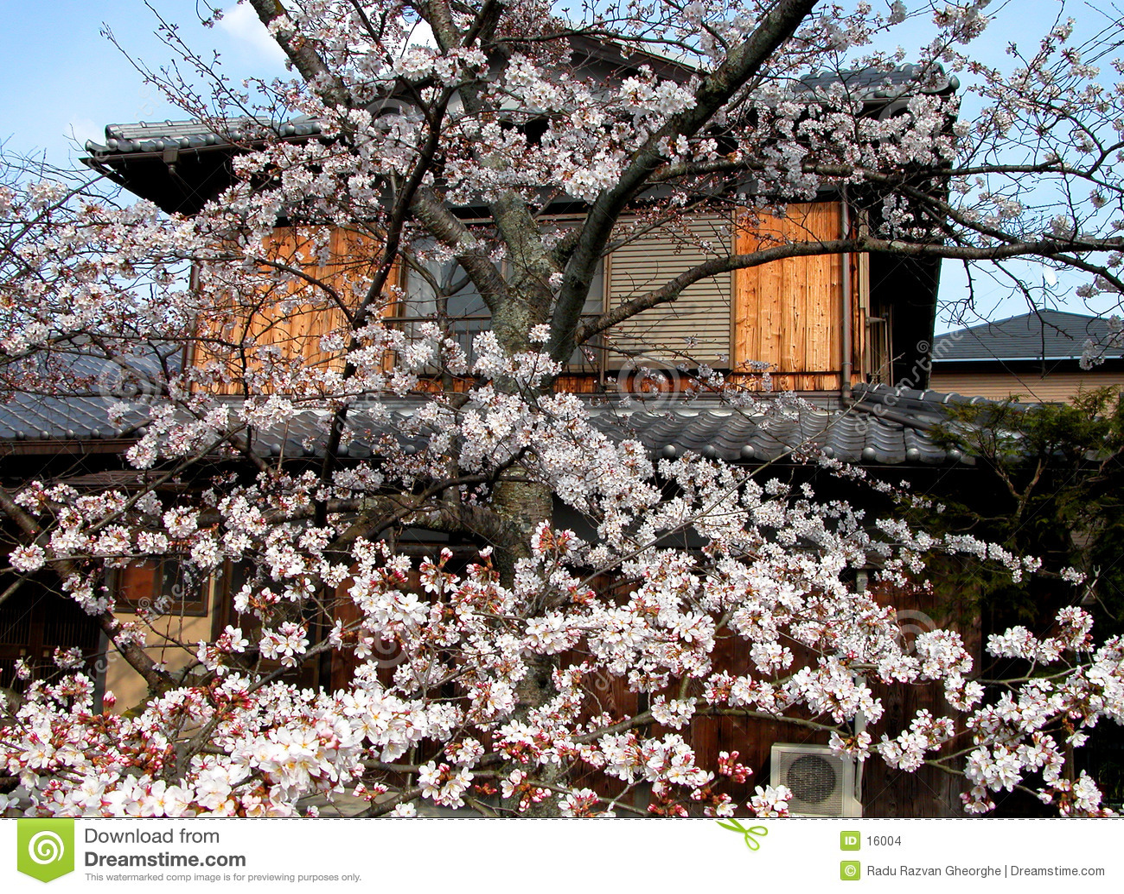 De Japanse lente