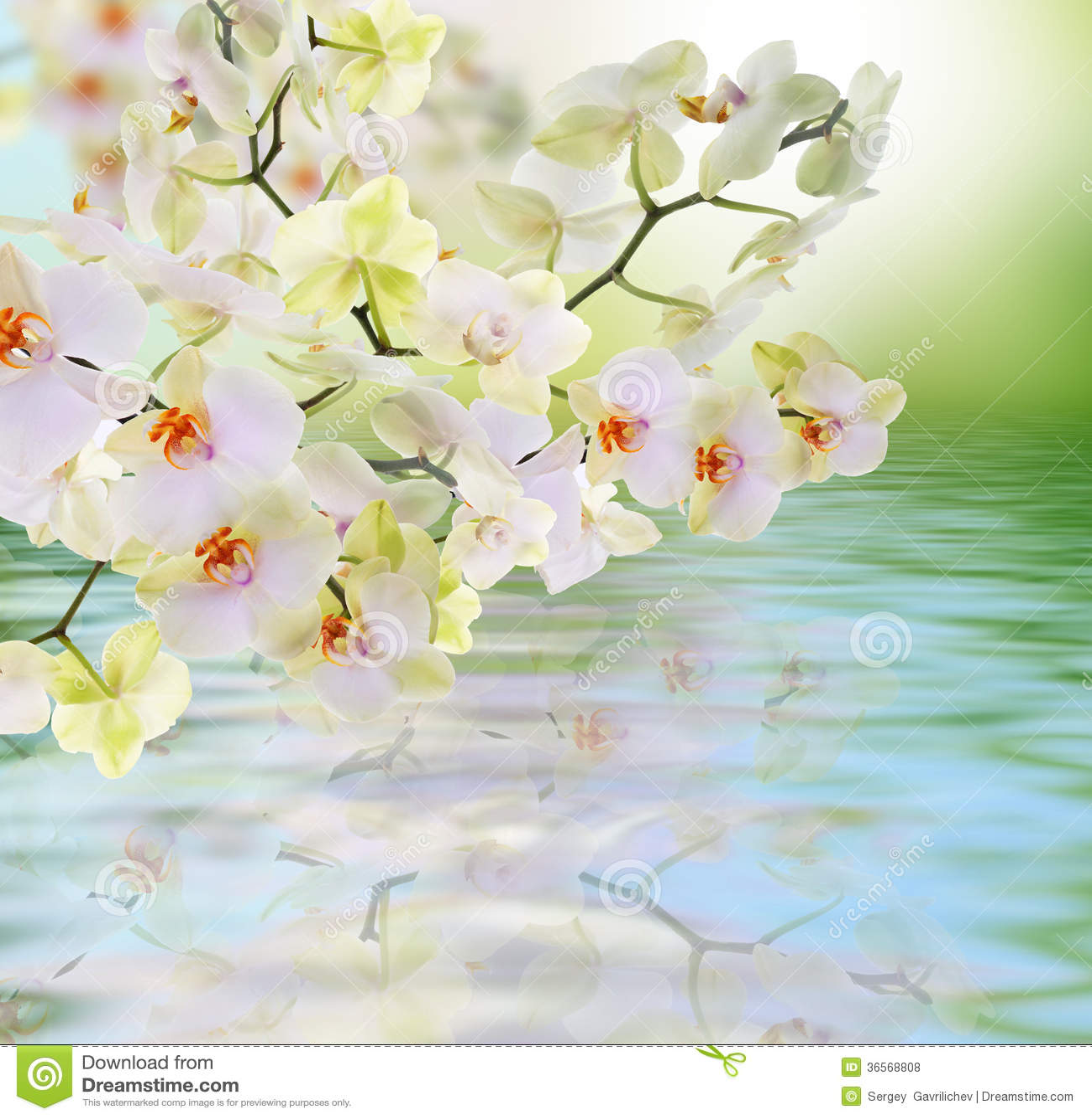 Japanse orchidee