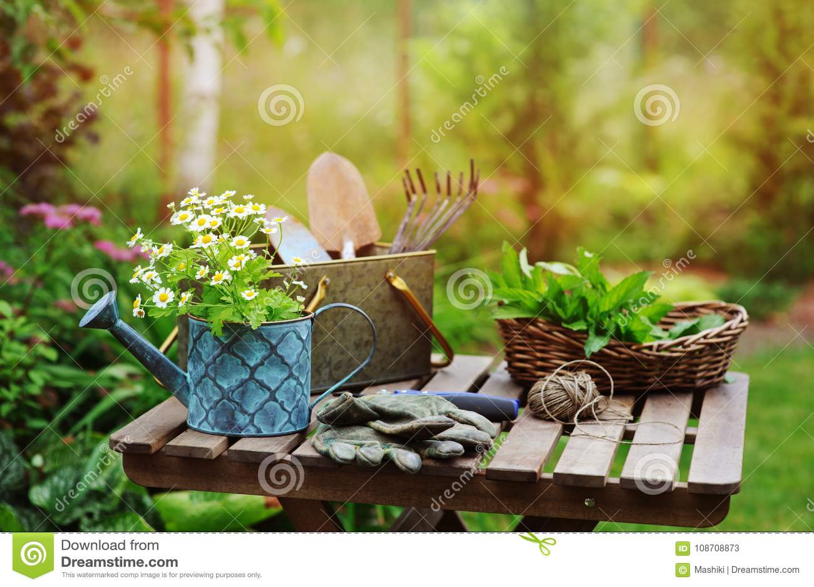 De jardin de travail toujours la vie en été Fleurs, gants et outils de camomille sur la table en bois extérieure