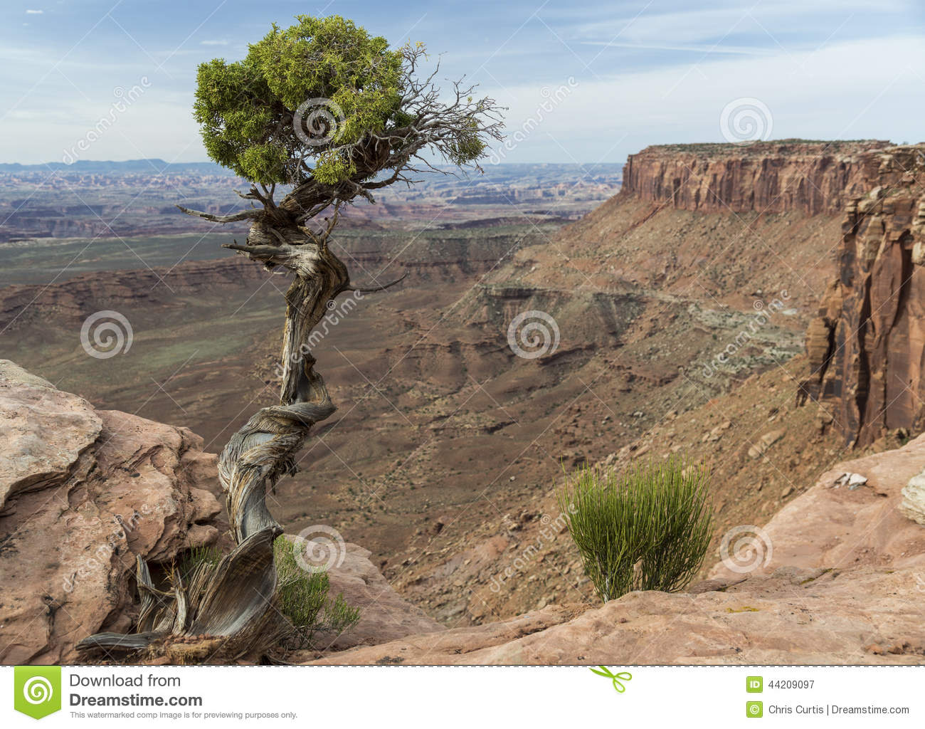 De Jeneverbessenboom en Canion van Utah in Canyonlands in Utah