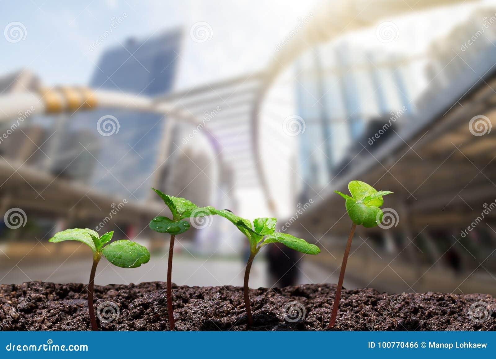 De jonge groene spruiten met water laten vallen het groeien van grond op vage stad met zachte zonlichtachtergrond