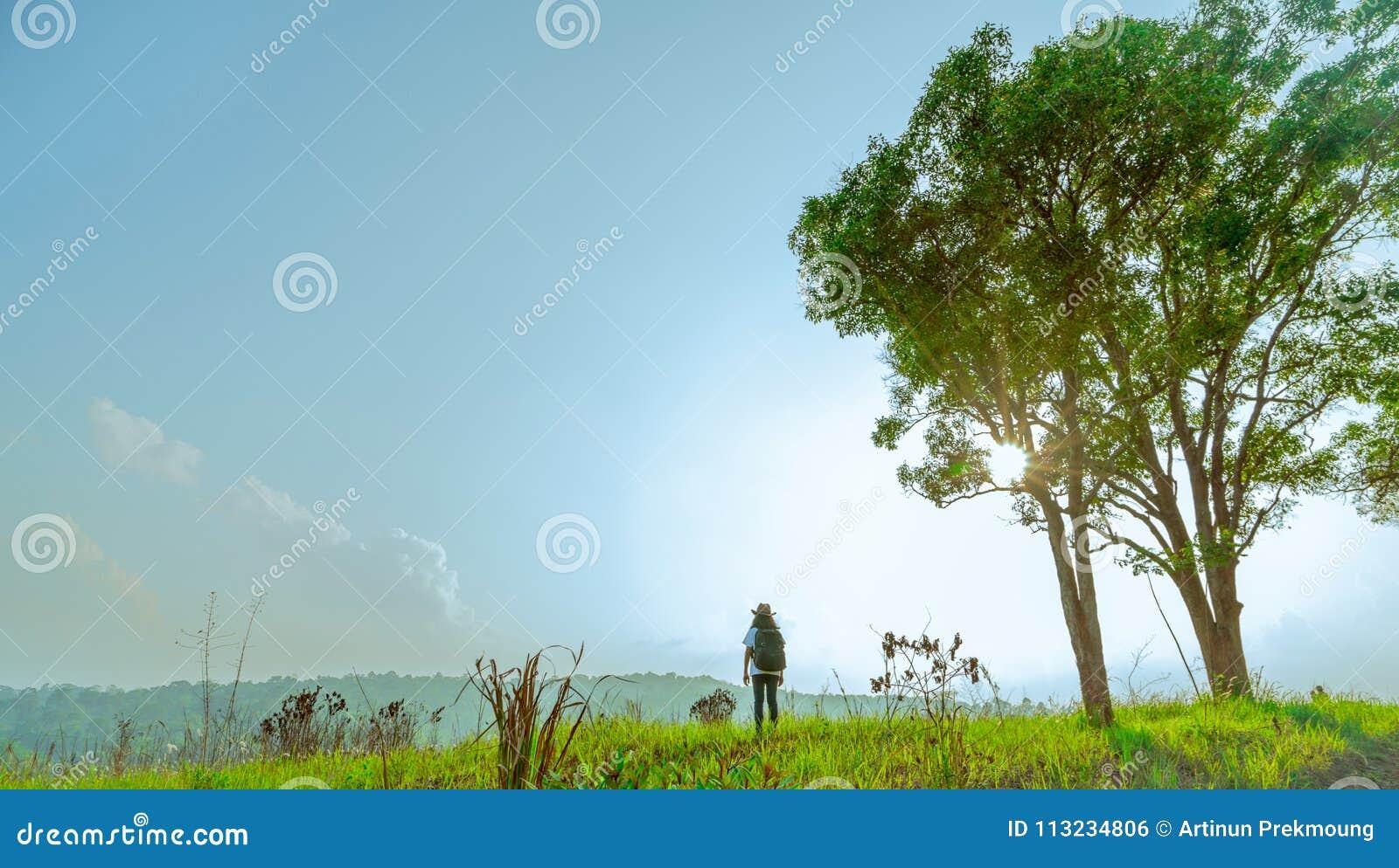 De jonge vrouwentoerist met hoed en de rugzak bevinden zich op de heuvel met groen grasgebied en paar grote boom op zonneschijnda