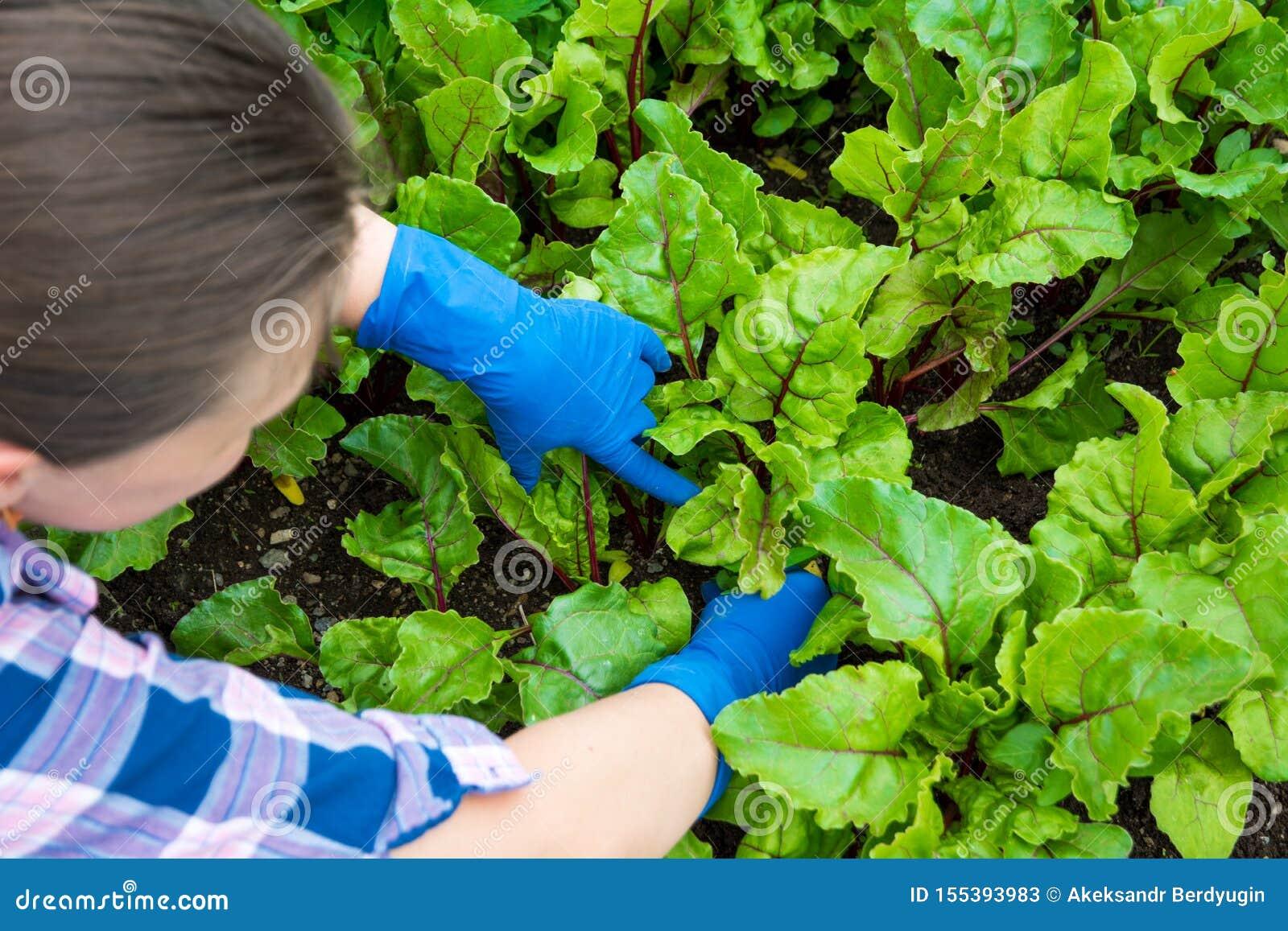 De jonge zorg van de vrouwentuinman van bloemen in de tuin Meisje die het onkruid in bloembed terugtrekken Hobbyconcept
