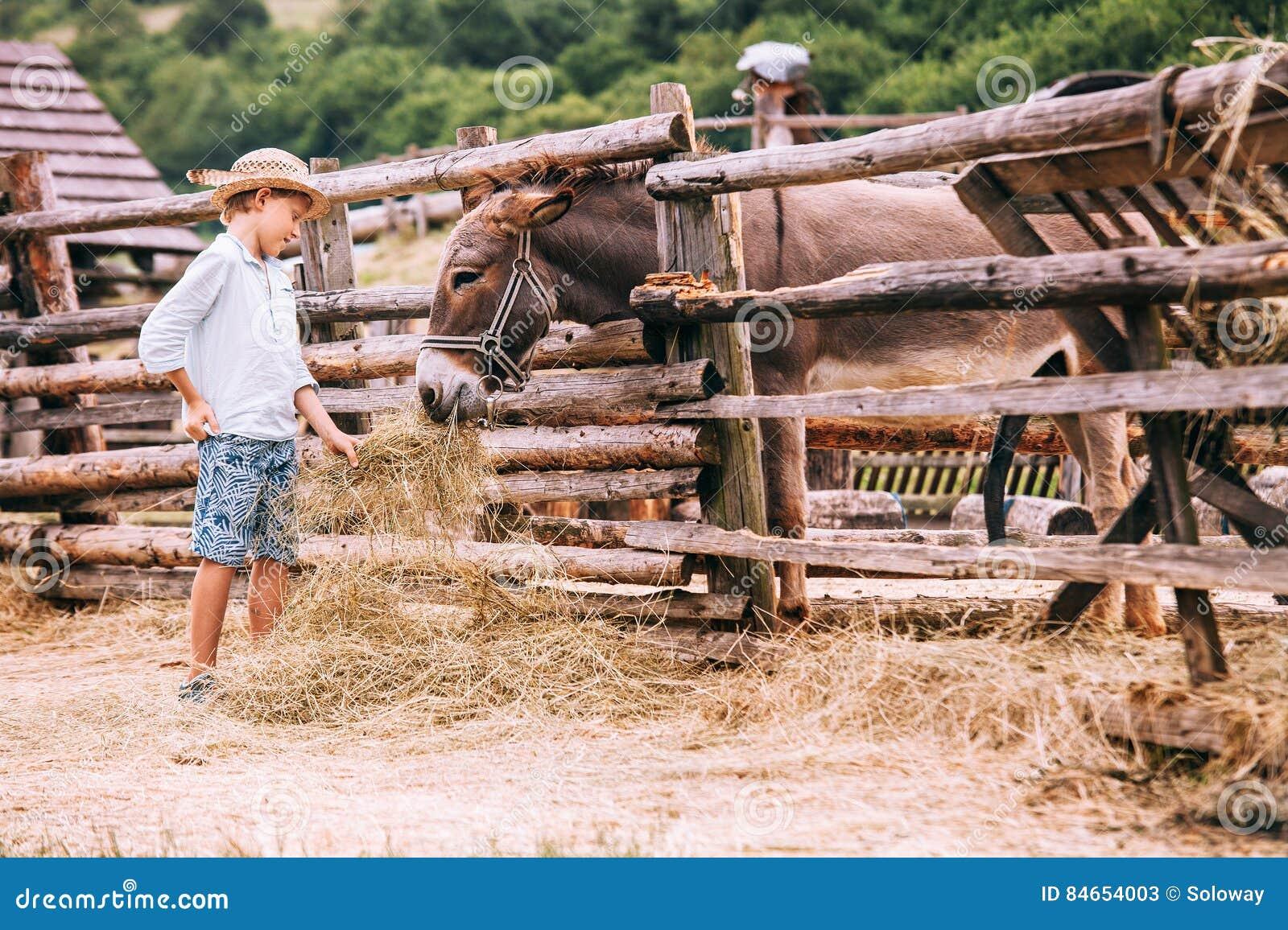 De jongen voedt een ezel op landbouwbedrijf