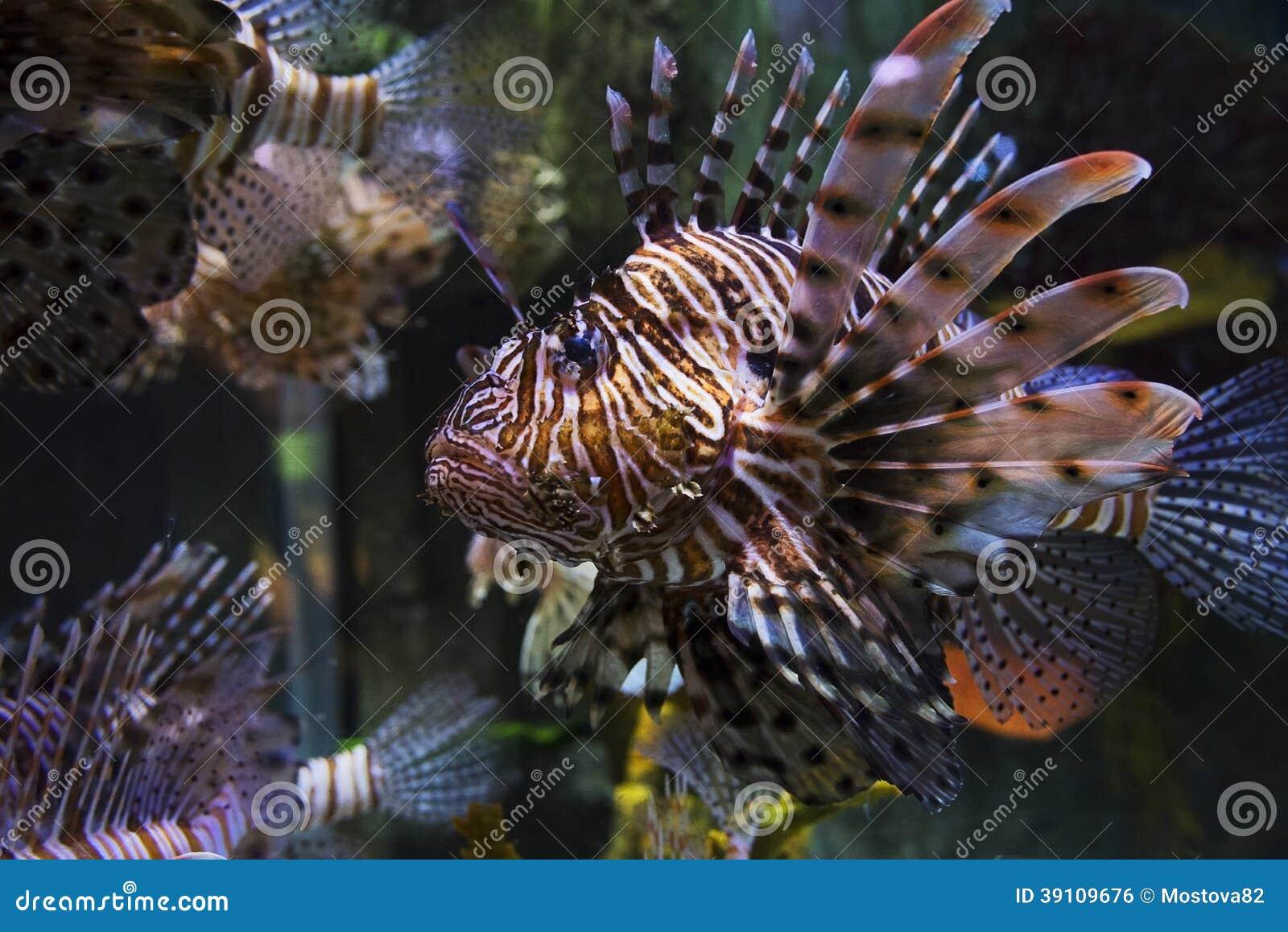 De kabeljauw van de vissenvlinder