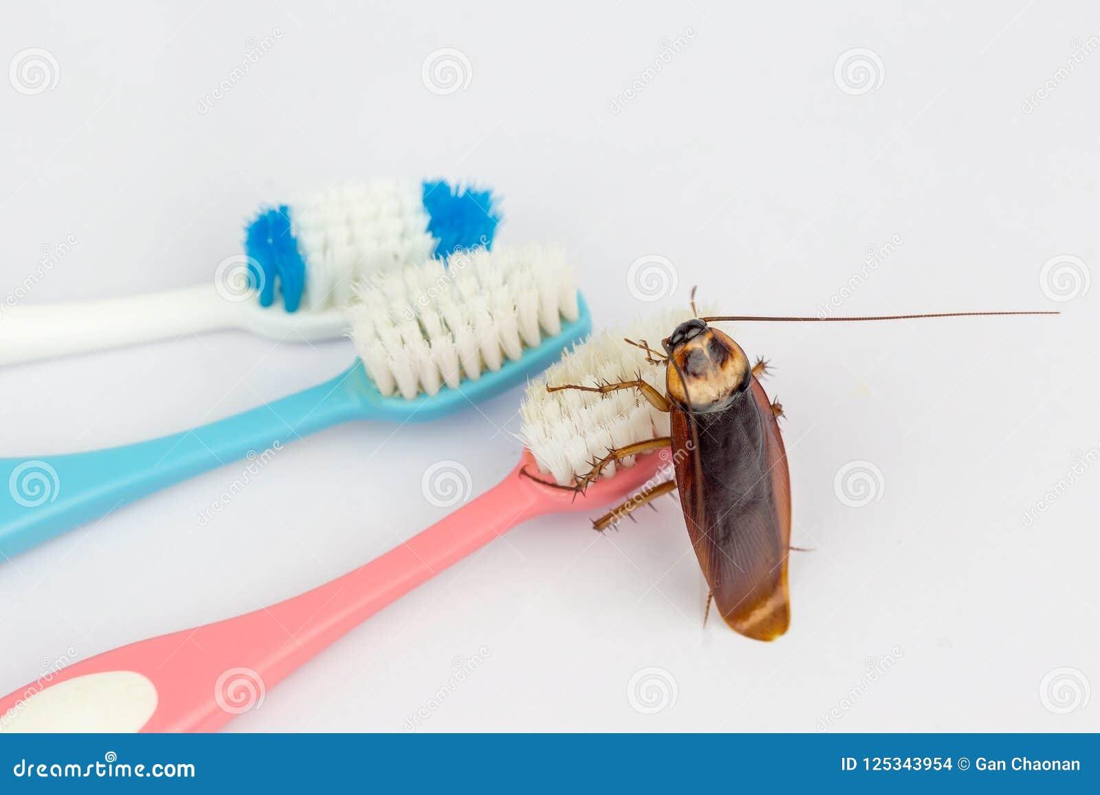 De kakkerlakken zijn op de tandenborstel in de badkamers,