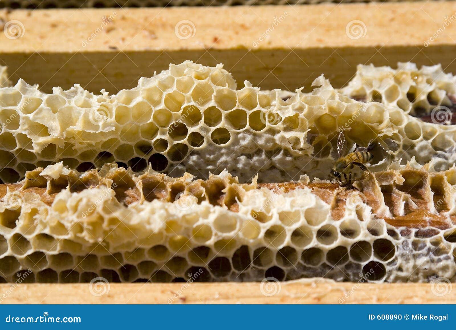 De Kammen van de honing