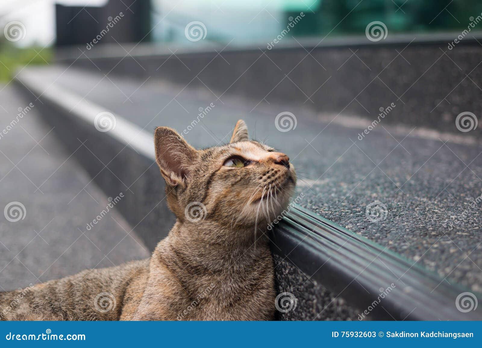 De kat die van de gestreepte kat de camera bekijkt