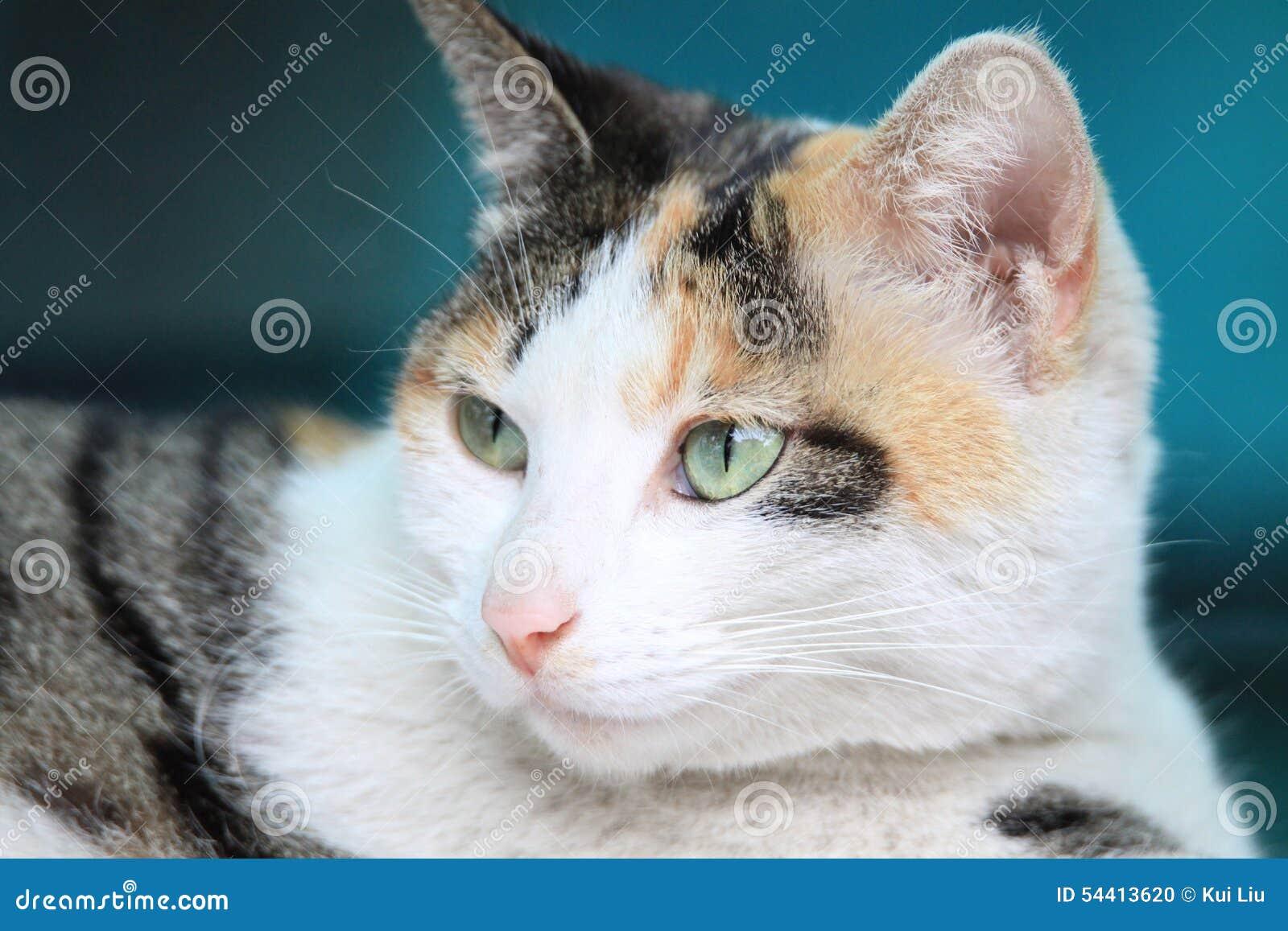 De kat in het denken