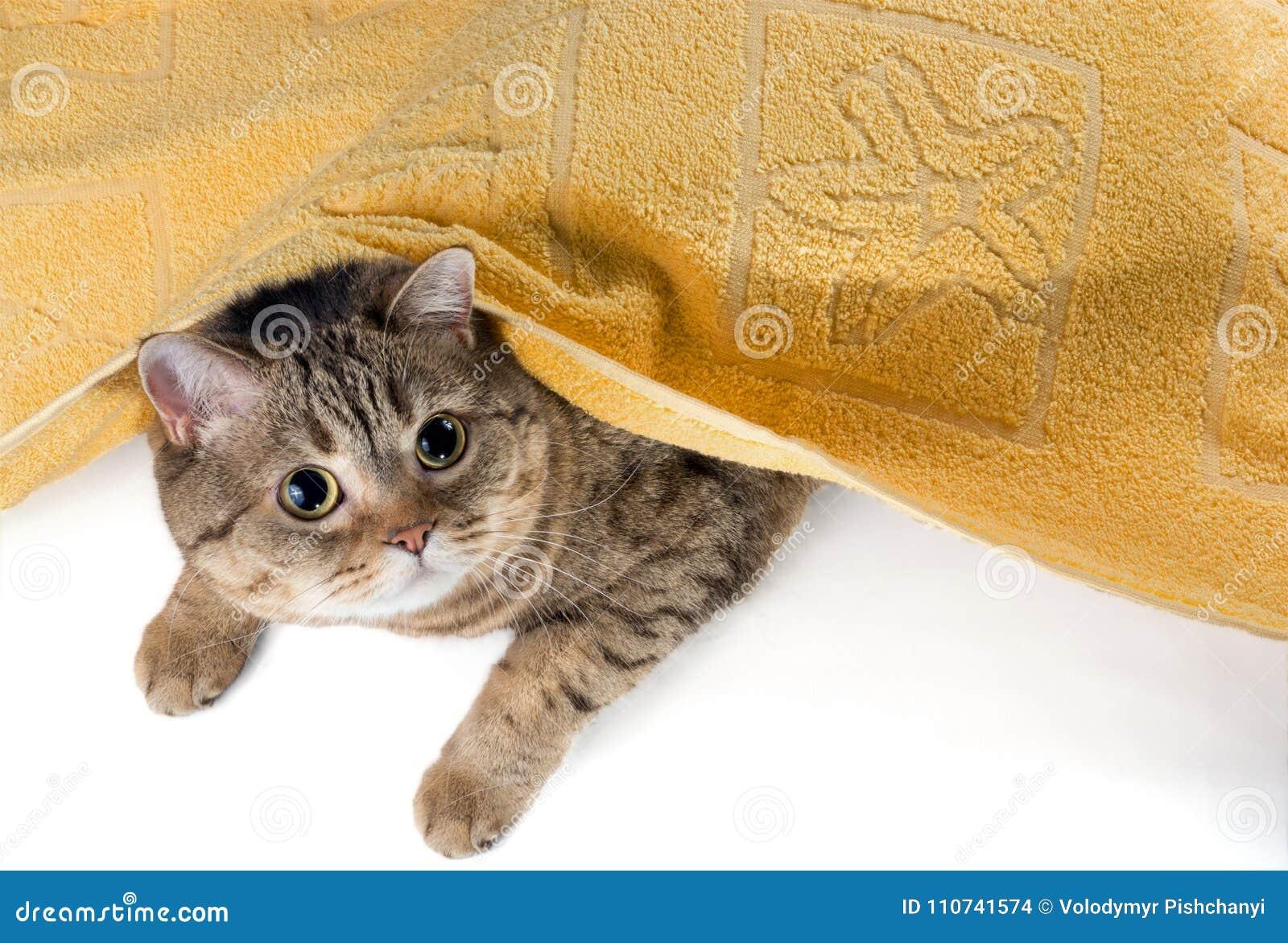 De kat ligt onder een gele badstofhanddoek