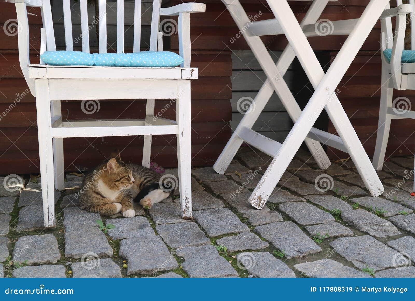 De kat ligt onder de witte stoel