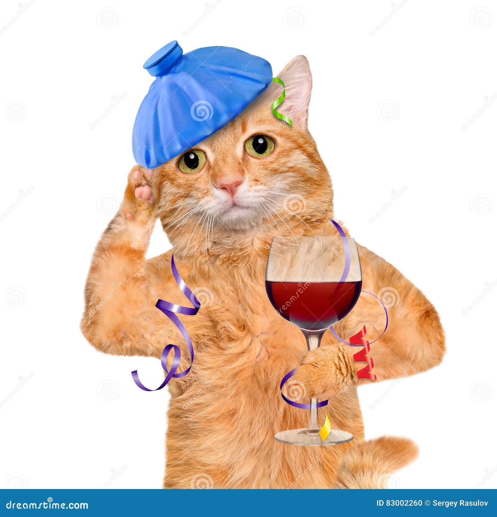 Wijn kater