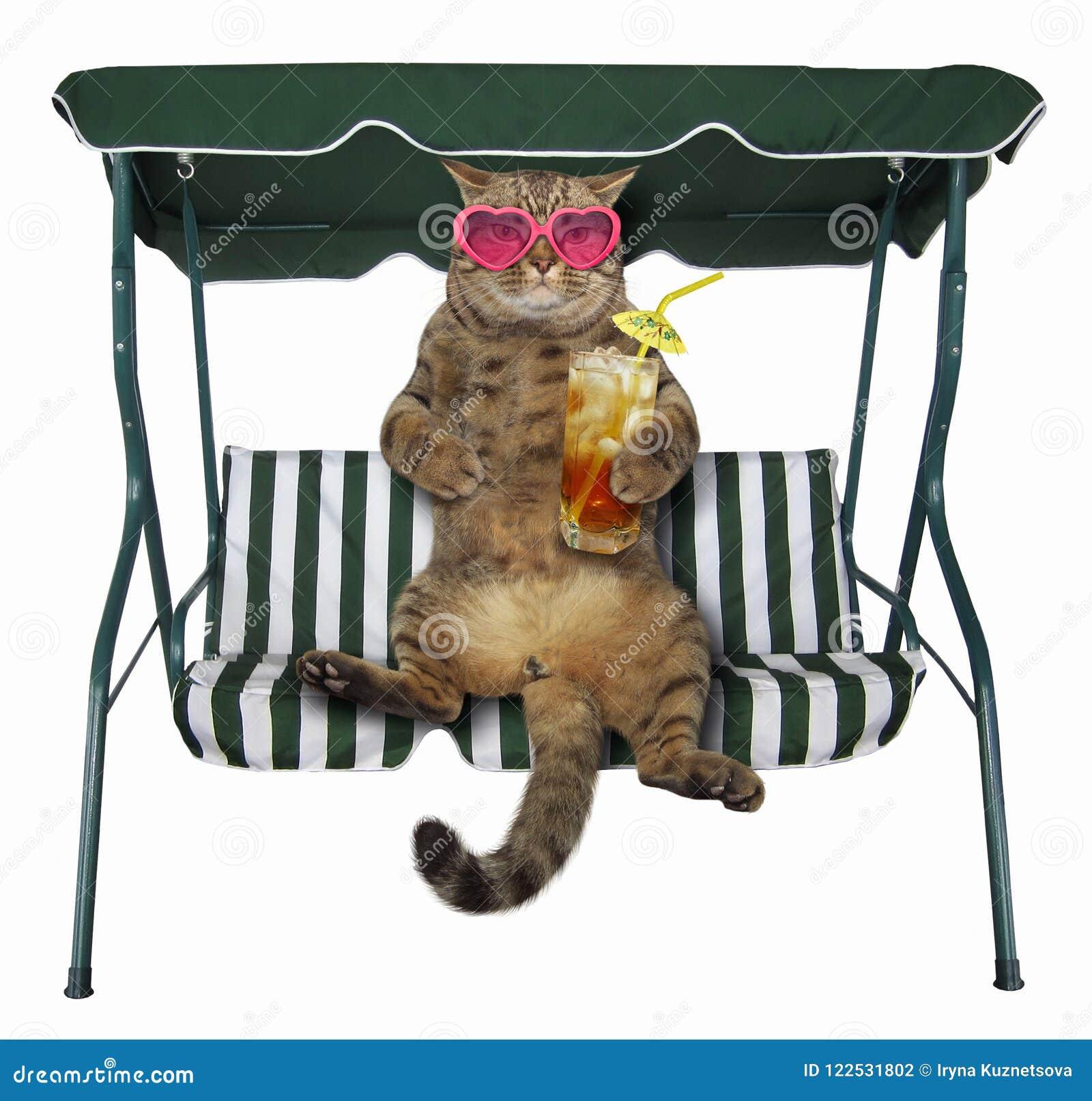 De kat met koude thee is op een schommelingsbank