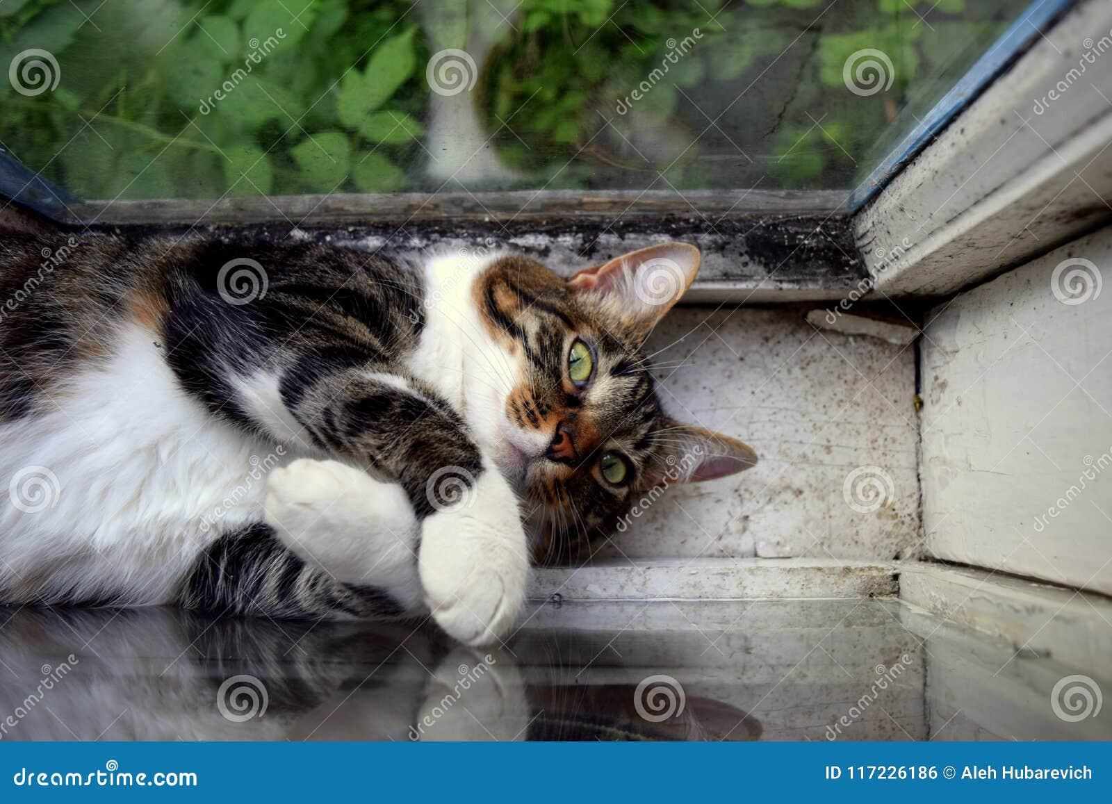 De kat rust