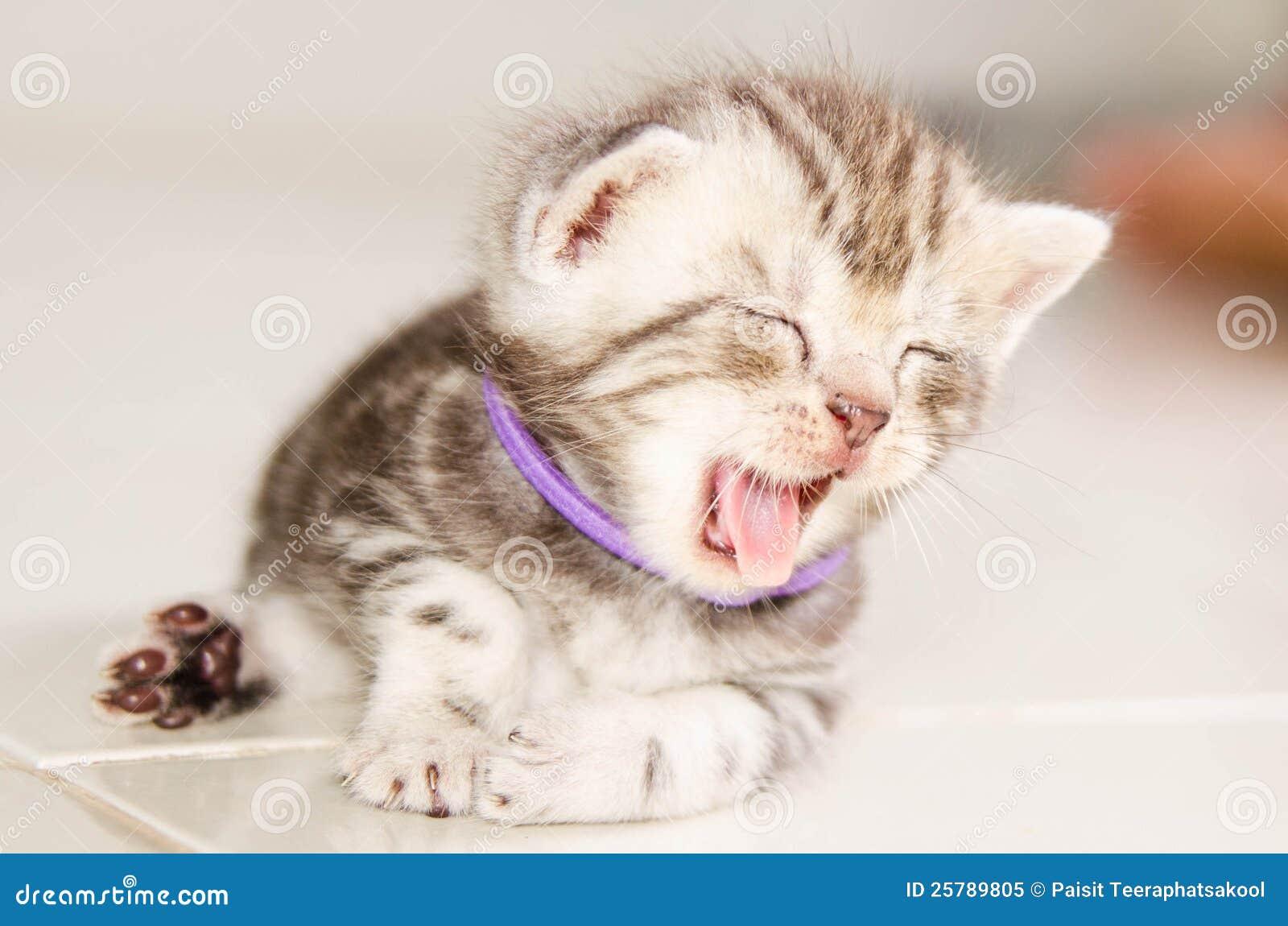 de kat van de baby stock afbeelding afbeelding bestaande uit watching 25789805. Black Bedroom Furniture Sets. Home Design Ideas