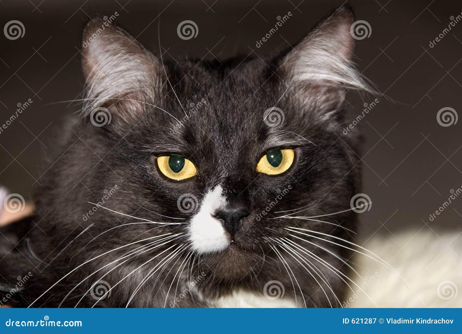 De kat van dieren