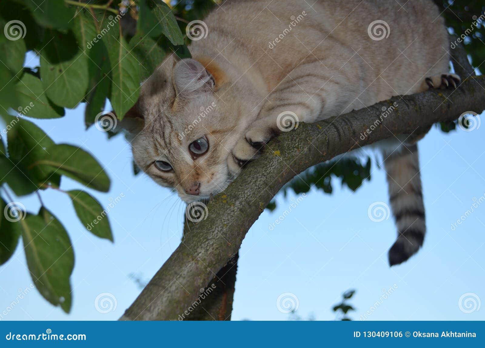 De kat van het gestreepte katpunt