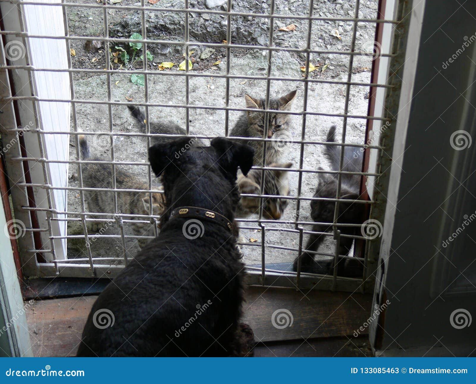 De katten kwamen om de hond te bezoeken
