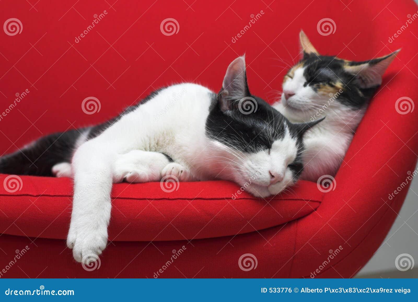 De katten van de slaap