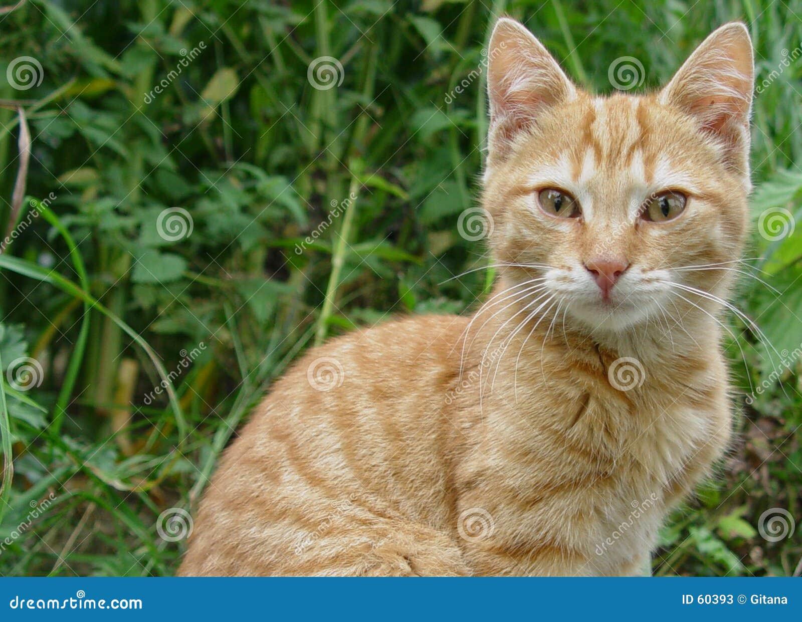 De katten van Wonderfull