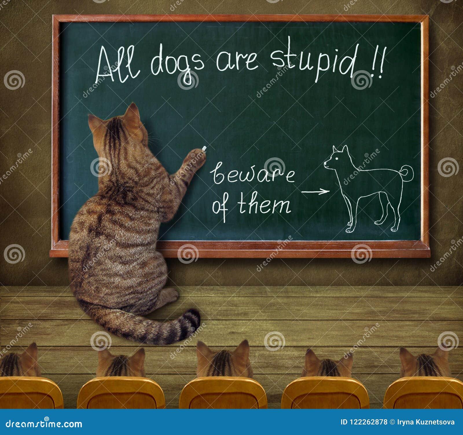 De kattenleraar schrijft op een bord