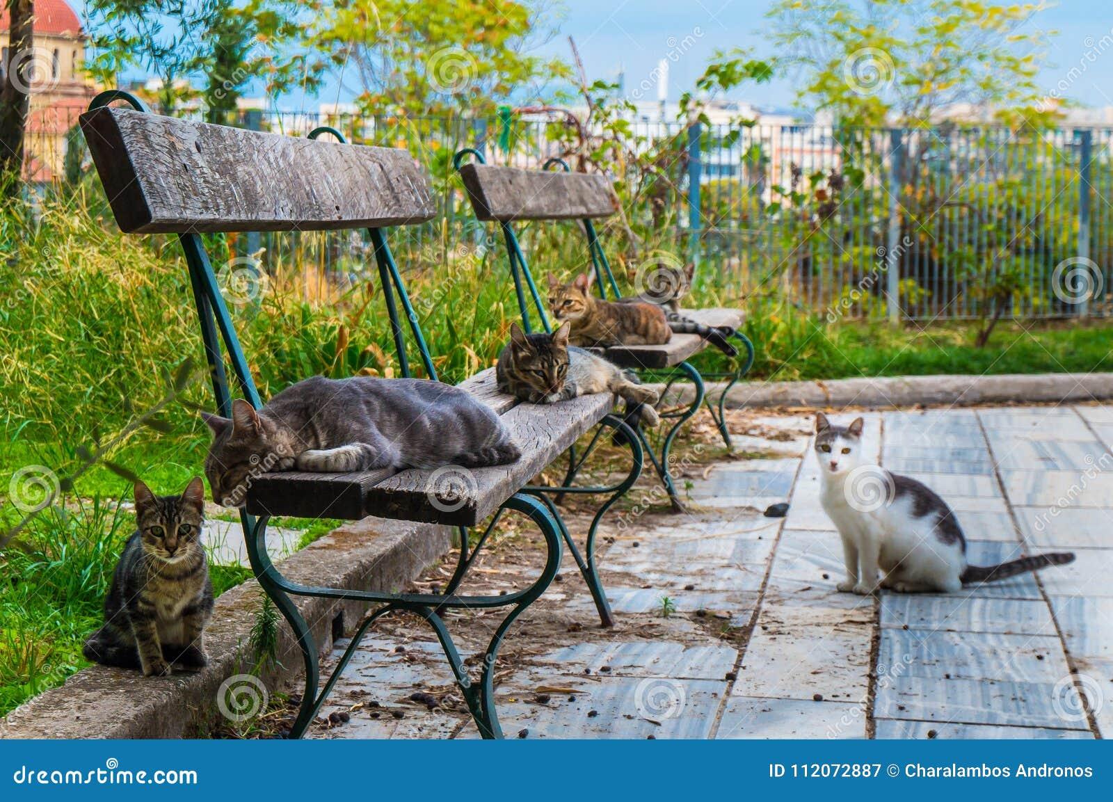 De kattenmaatschappij Katten die op een bank voor hun siësta op Monastiraki-gebied in Athene Griekenland leggen