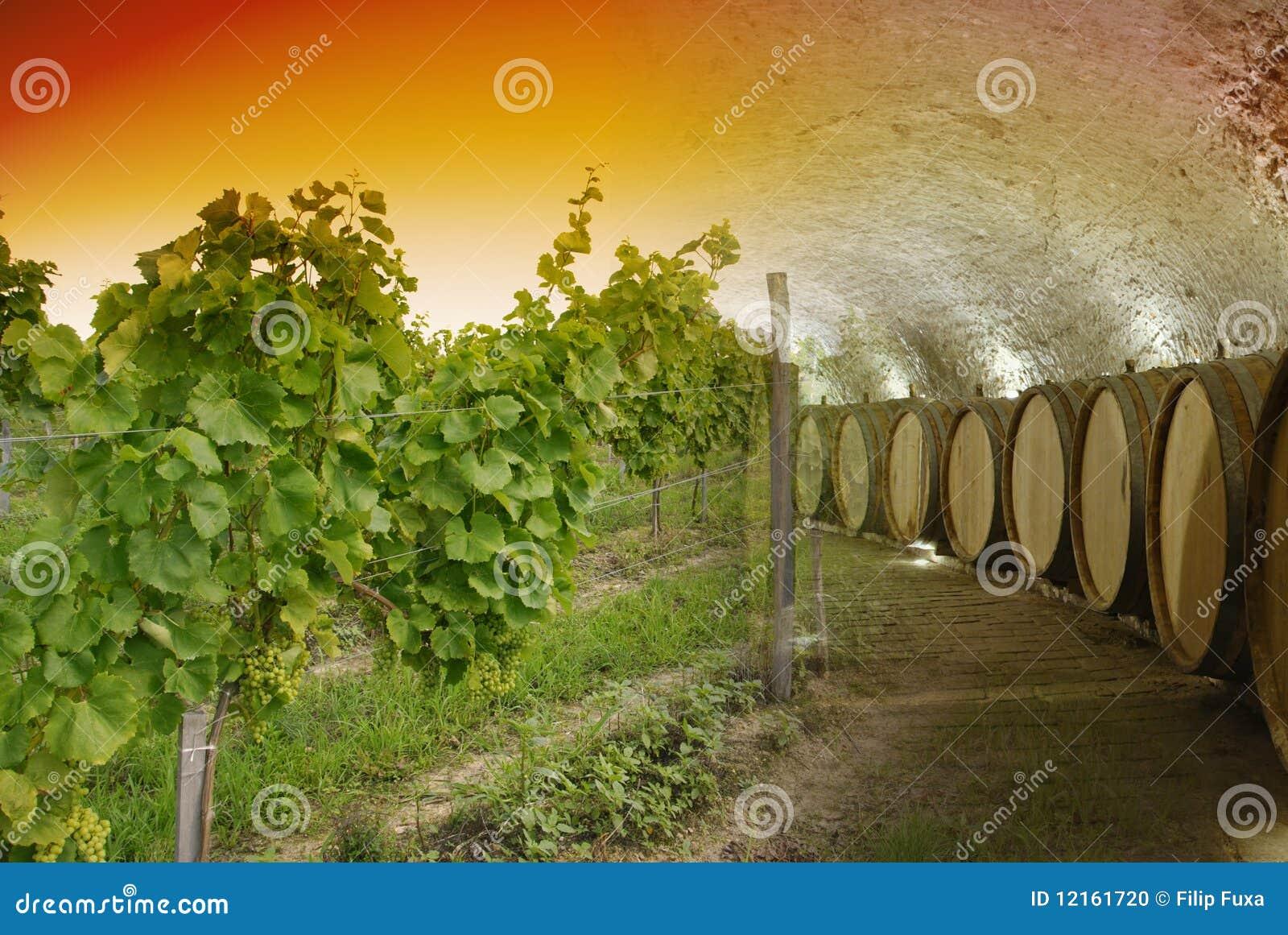 De kelder van de wijn en wijnmakerij