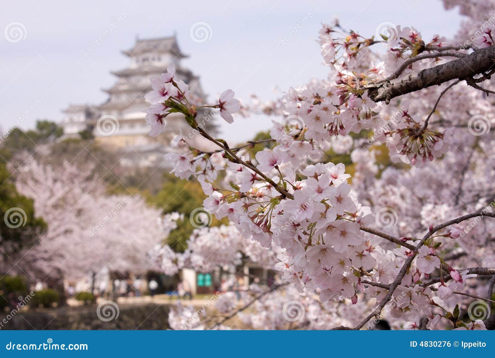 De kersenbloesems van Sakura rond kasteel