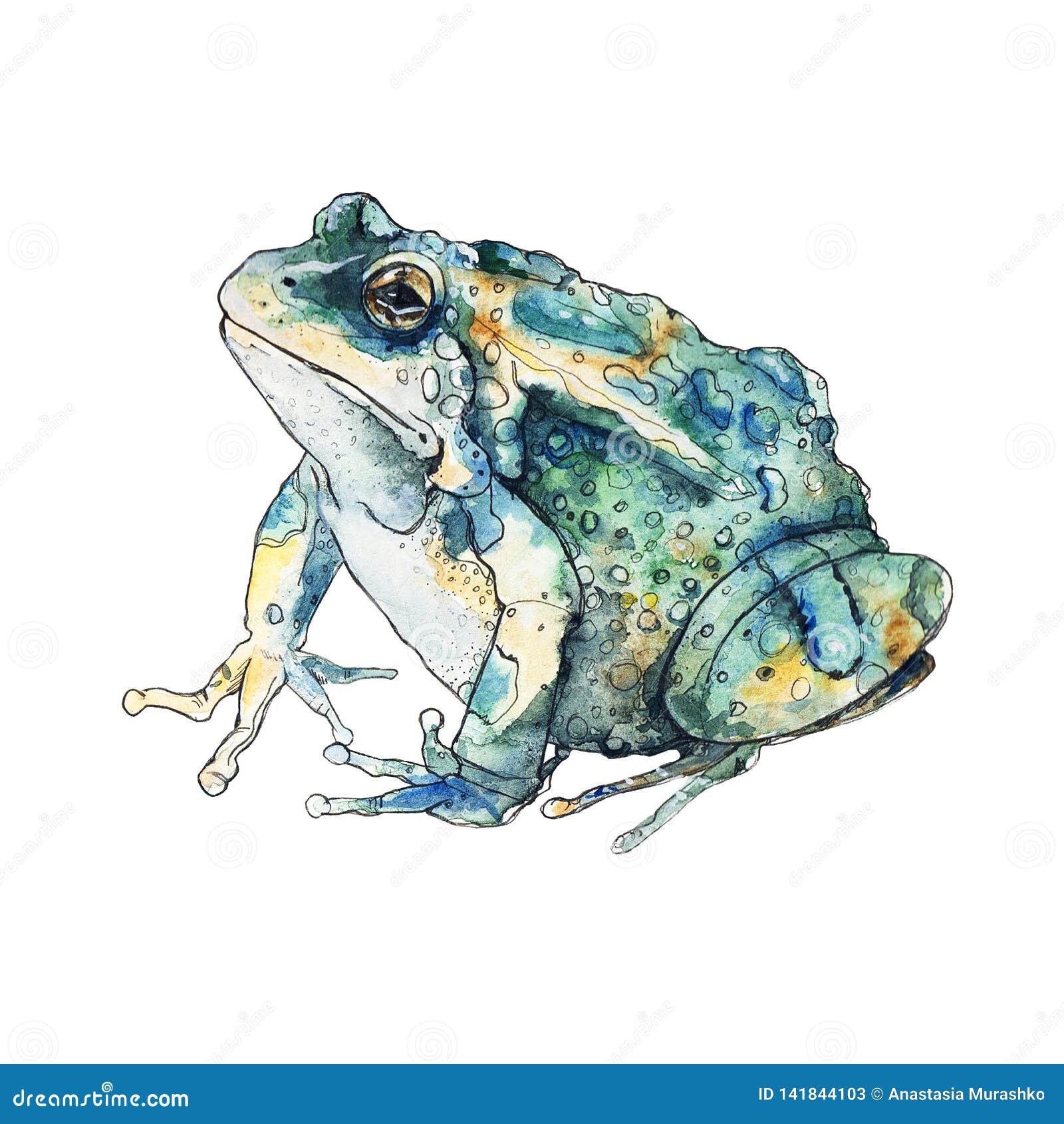 De kikker van de schetswaterverf